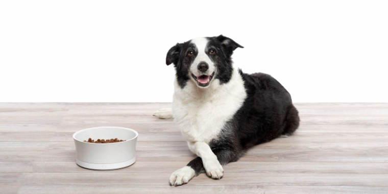 犬の自動給餌器おすすめ7選|カメラ付きや、スマホから操作できるものまで