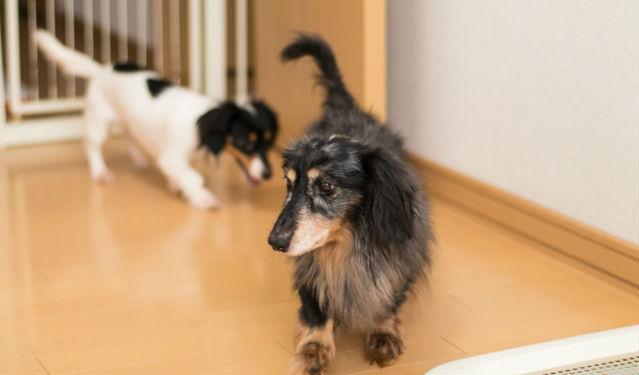 ペット(犬猫)も高齢化社会!? 統計にみる理由と病気のケア、拡大する介護ビジネスを解説