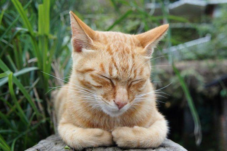 猫の歯茎から出血……歯周病などの症状や原因、予防法や応急処置を解説【獣医師解説】
