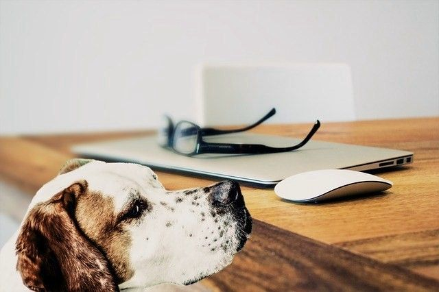犬の胃捻転・胃拡張は大型犬に起こりやすい! 症状や原因、予防法を解説
