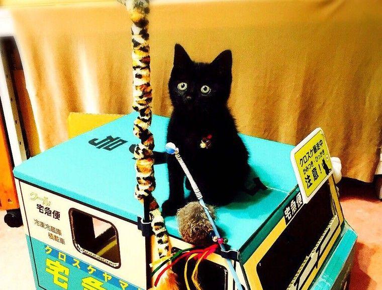 猫は7階以上の高さから落ちても大丈夫? 猫の体の構造