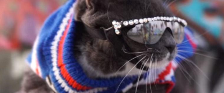 猫がサングラス!? LAの猫ベーグルちゃんがインスタグラムで人気者に