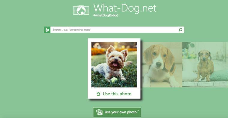 「What is your dog?」で写真から犬種がわかる! AIを使ったアプリがすごい