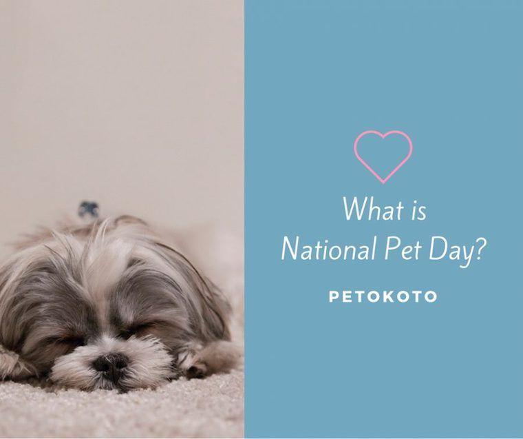 4月11日は飼い主とペットが愛を確かめ合う日「National Pet Day」