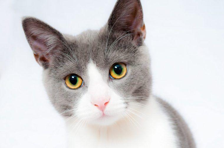 猫がかかりやすい病気ランキング! 猫種、年齢別にチェック