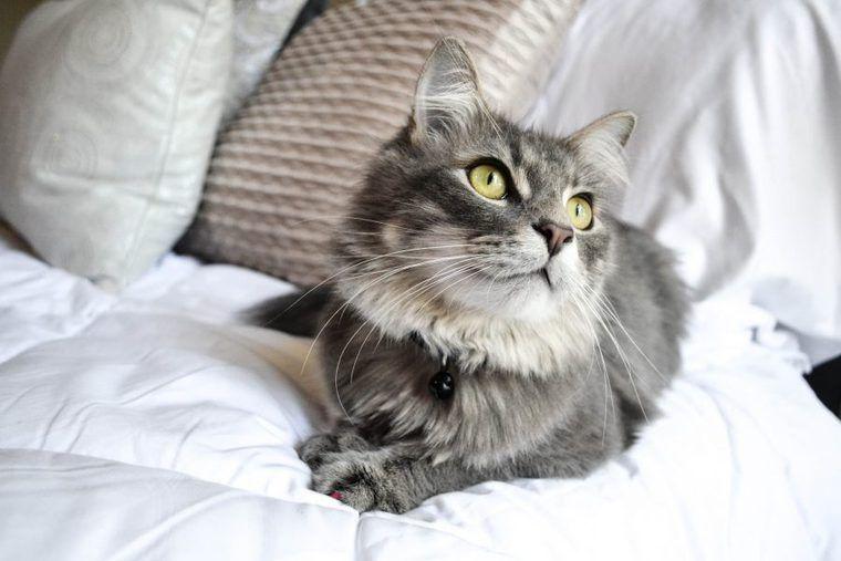 ネコノミクスの経済効果を考える 猫ブームで2兆円超!?