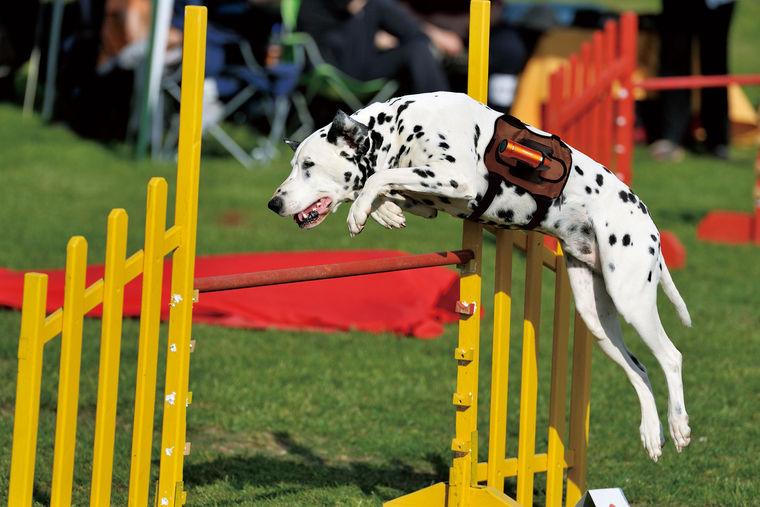 愛犬が何を見ているか知りたくない? パナソニックの犬用カメラアクセサリーがその願いを実現!