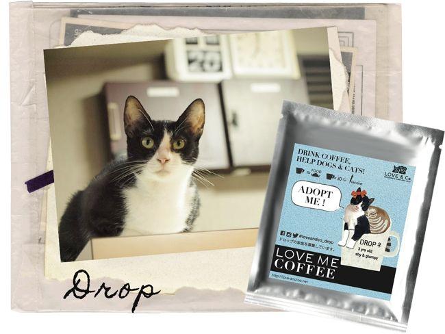 保護した犬猫たちがモデルになったドリップコーヒーのギフトバック発売 売り上げはシェルター運営費に