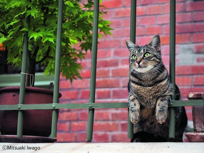 【画像】全国ネコ祭り! 動物写真家・岩合光昭さんの写真展が17会場で開催