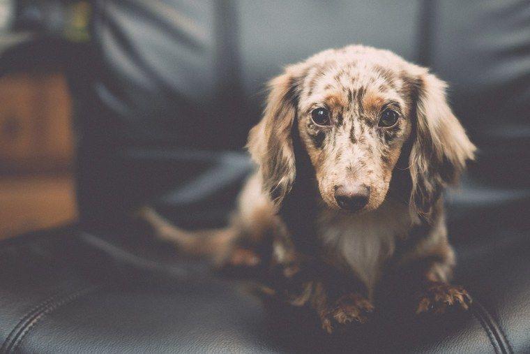 犬の皮膚が赤い場合に考えられる症状や原因 応急処置や予防ケアも