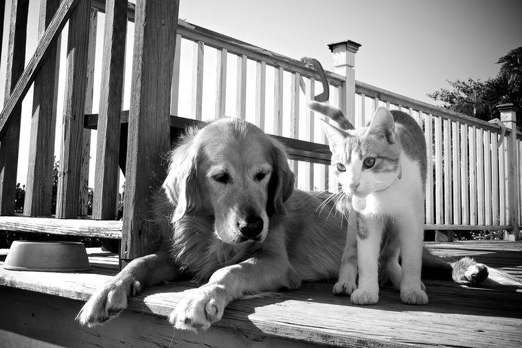 ペットはもはや家族の一員! ペットの福利厚生が充実している会社まとめ