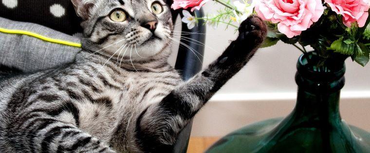 えっこんなに!? 猫をしつける飼い主は8割に及ぶことが判明