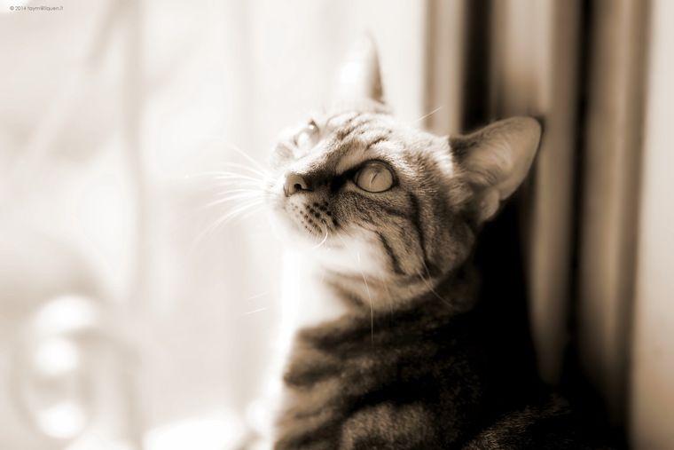 【がん認定医解説】猫のガンについて~症状・原因・種類・治療法など〜