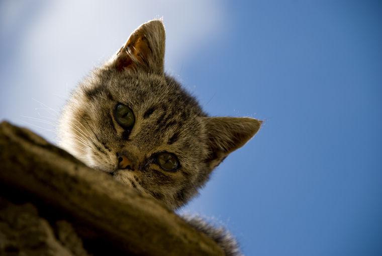 猫のお腹に塊があるが、がんの可能性もある?【がん認定医が回答】