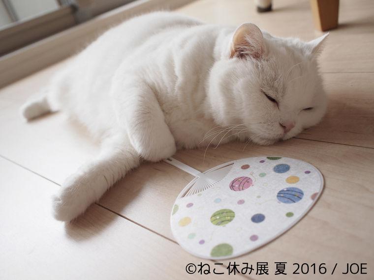 新作尽くしの猫クリエイター合同写真&物販展「ねこ休み展 夏 2016」開催中