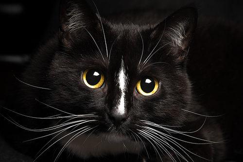 猫に多い「心筋症」の原因や症状、治療法や予後【循環器認定医が解説】