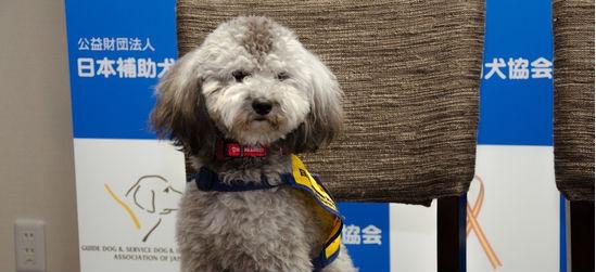 ペッツファーストが「聴導犬育成プロジェクト」を開始 国内の聴導犬はいまだ65匹