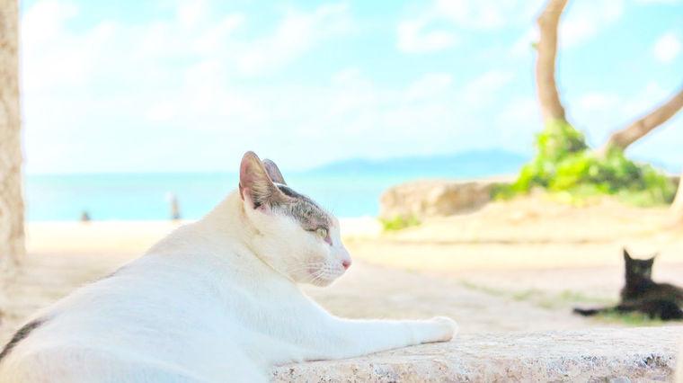 沖縄 竹富島が猫島って本当? 南国リゾートに生きる猫たちに会ってきた