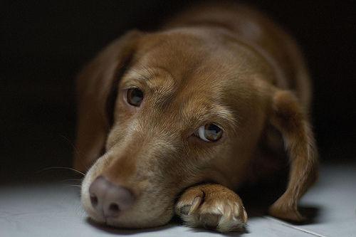 愛犬が心臓のがんと診断……セカンドオピニオンは必要?【腫瘍認定医が回答】