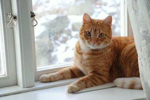 【ペットの再生医療vol.3】スーパー細胞「脂肪幹細胞療法」が猫の口内炎の救世主に?