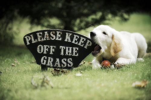 アメリカの獣医師会が『ポケモンGO』の利用に注意喚起!? 愛犬との散歩で気を付けるべき五つのこと