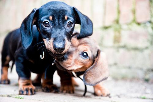 犬の皮膚がんの症状や治療・予防法は? 最も多い犬のがん【認定医が解説】