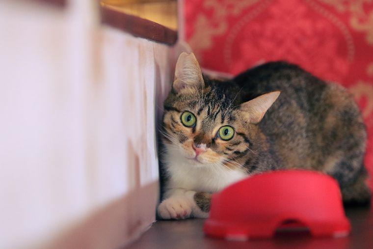 「りんご猫」って知ってますか? 中野に猫エイズ専門の保護猫カフェがオープン