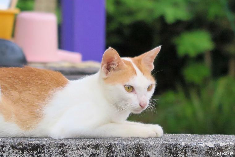 猫の動脈血栓塞栓症の原因や症状、治療・予防法など【循環器認定医が解説】