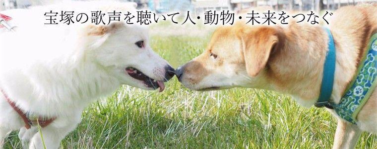 9/9「第1回 保護犬・猫のためのチャリティーコンサート」開催 元宝塚の真丘奈央さんが出演
