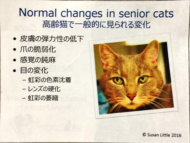 老猫の「病気とは異なる正常な変化」とは? カナダの獣医が教える猫の健康管理