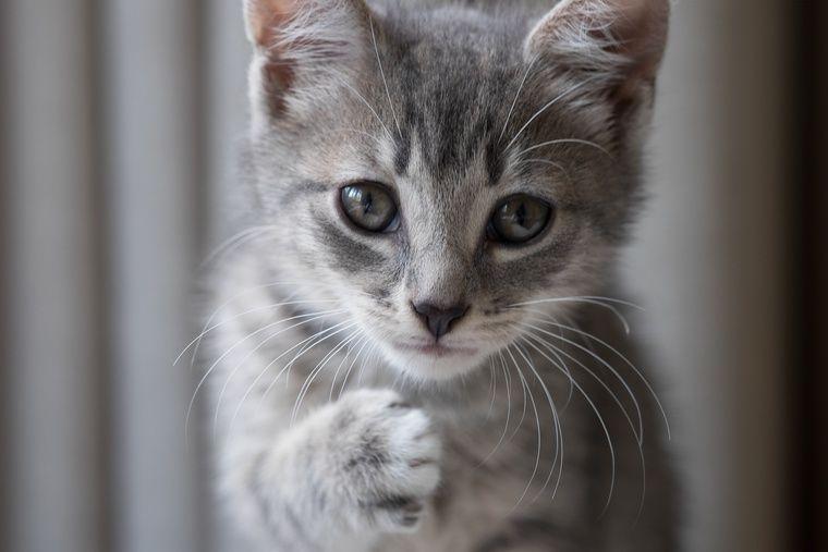 猫の飼育費用はいくら? 初期費用から臨時でかかる費用まで紹介