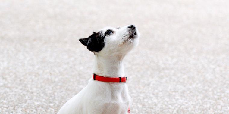 犬を飼う費用はどのくらい? 飼い始め、飼ってから、臨時でかかる費用