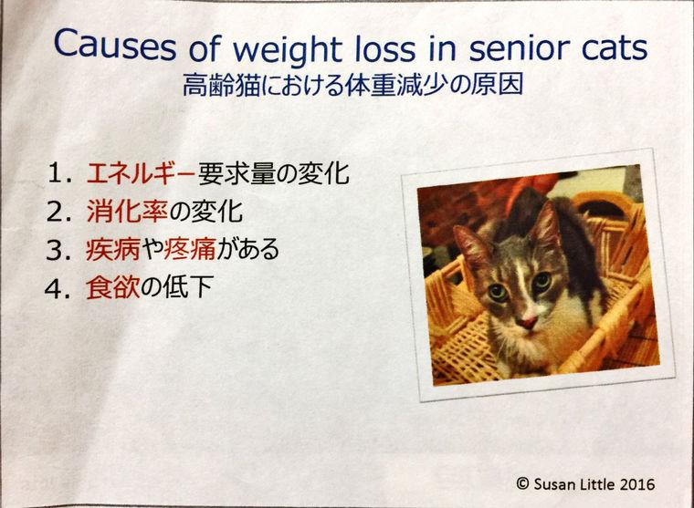 説明できない体重減少は病気のサイン? カナダの獣医が教える猫の健康管理