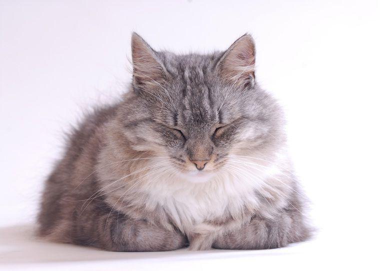 猫アレルギーだって猫を飼いたい! アレルギーの原因と対処法を紹介