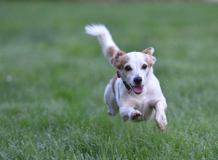 犬に血統書は必要? メリット・デメリットや発行手続き、詐欺について解説