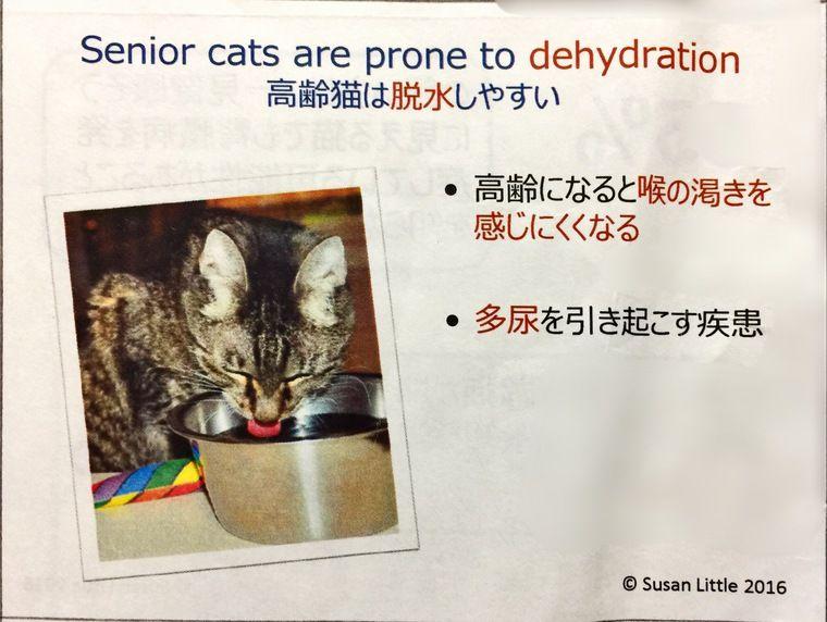 動物病院で先生に伝えるべきこと カナダの獣医が教える猫の健康管理