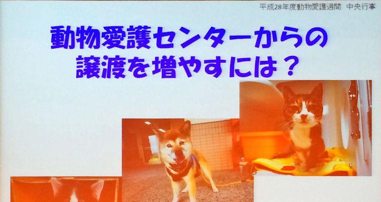譲渡された犬猫の出戻りは当然!? 新潟県動物愛護センターの意外な取り組み