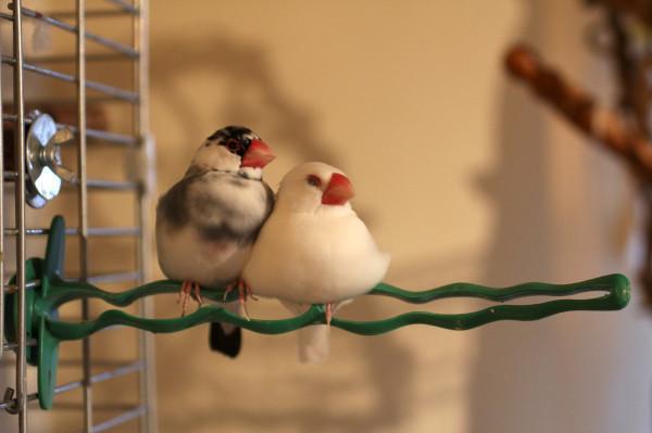 ペットの鳥は旅行・出張の時お留守番 or 連れて行く? ペットホテルやシッターも