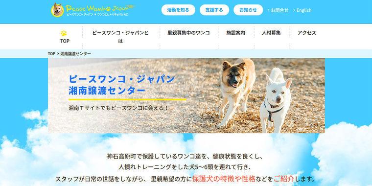 【広島から全国へ】都内初のピースワンコ・譲渡センターがオープン! 大西純子さんインタビュー(1)