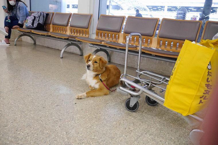 犬猫を飛行機に乗せるのにかかる料金、条件は? 海外には機内持ち込みできる航空会社も