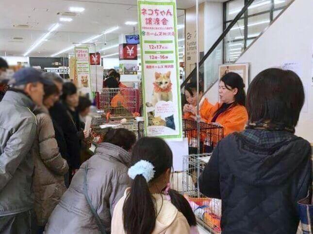 ホームセンターの「島忠」が保護猫の譲渡会を開催 次回は保護犬も参加