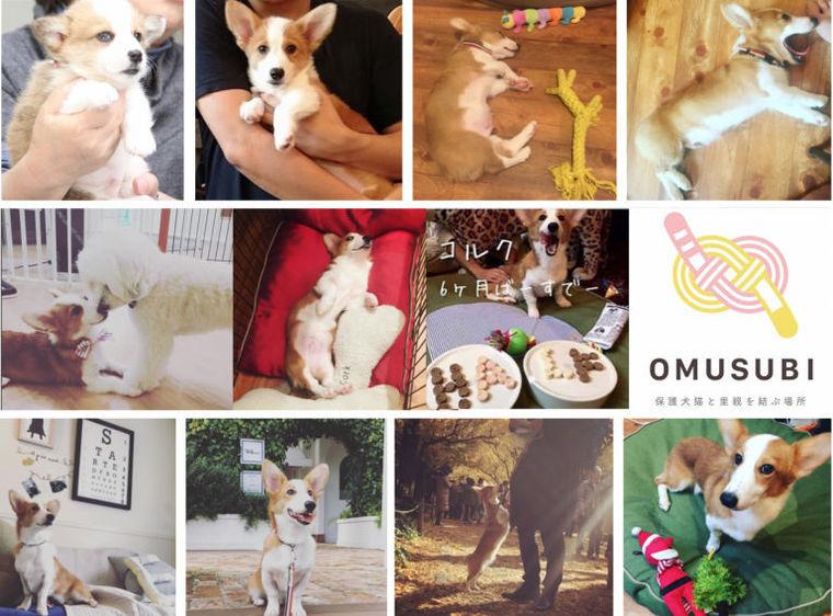 新サービス「OMUSUBI」(お結び)への想い