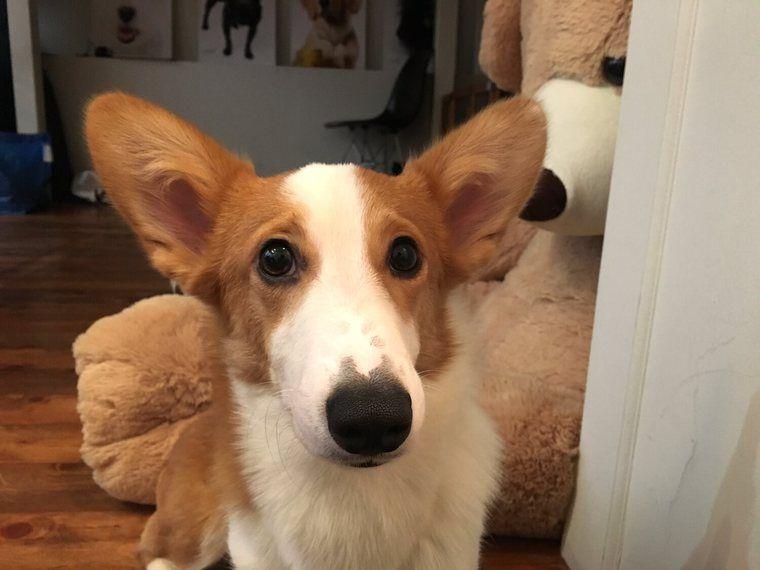 """コルクが私にとって初めての""""保護犬""""だった"""