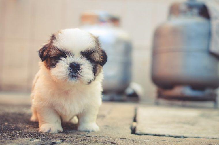 犬の疥癬(ヒゼンダニ症)とは | 症状や感染経路・検査・治療方法など【皮膚科認定医が解説】