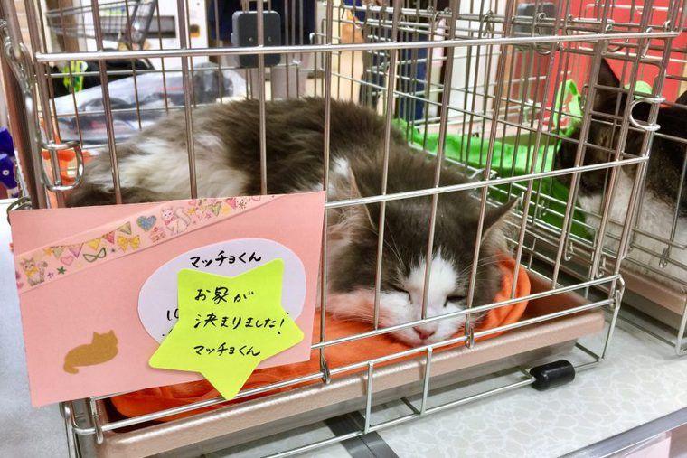 犬猫18匹に里親希望! ホームセンター「島忠」で保護犬の譲渡会も初開催