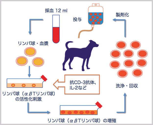 犬猫に優しいがん治療を 活性化リンパ球療法のメリット・デメリット – ペットの免疫療法vol.2 –