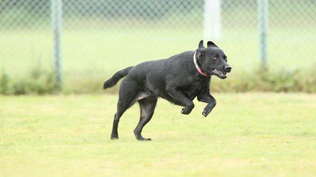 遊園地で譲渡会!? 那須ハイランドパークが保護犬の里親探しを目的とした犬舎を建設