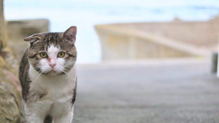 野良猫に餌をあげるのは違法? 法律や飼い方、地域猫活動を解説