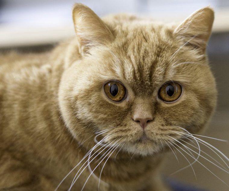 猫の拘束型心筋症とは | 症状と原因、治療・予防法など【循環器認定医が解説】