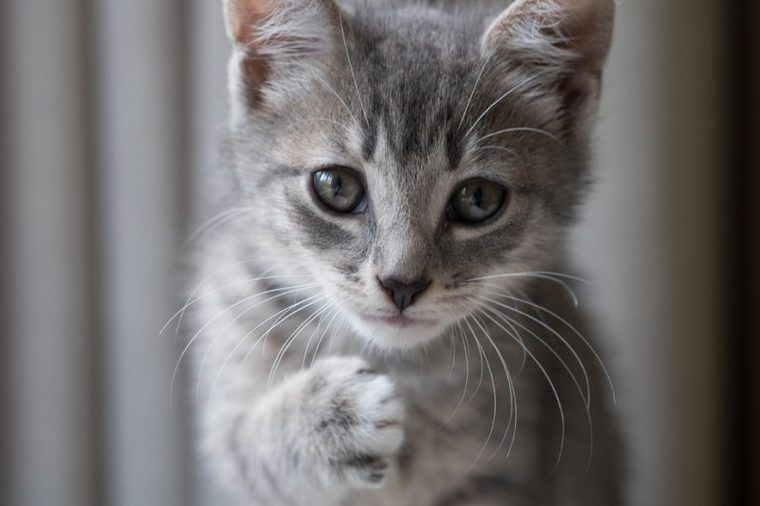 猫の心室中隔欠損症 | 症状と原因、治療・予防法を循環器認定医が解説